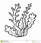 Algae Coloring Pages Getdrawings sketch template
