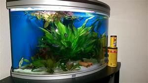 Aquarium Zubehör Günstig : eck aquarium ca 190 l aquatlantis evasion corner in landau fische aquaristik kaufen und ~ Frokenaadalensverden.com Haus und Dekorationen