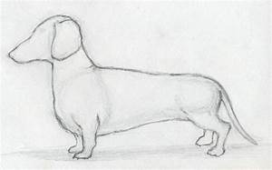 Dogs Drawings In Pencil For Kids