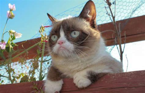 grumpy cat   money   people   year