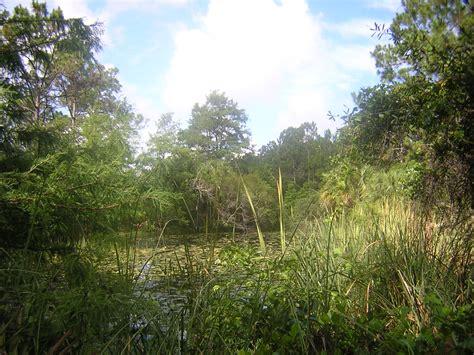 Hammock Trails by Wetlands Hammock Trail Florida Hikes