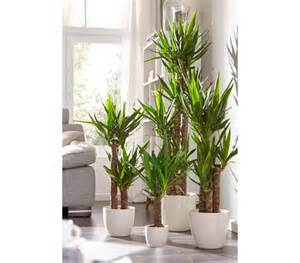 wohnzimmer palme wohnzimmer pflanzen palme kleine weiße tierchen auf wohnzimmer palme pflanzen