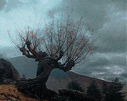 harry potter  love  whomping willow   gif find
