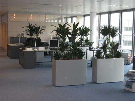 Büropflanzen Hydrokulturen Düsseldorf Bürobegrünung