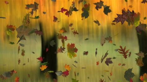 Autumn Tree Leaf Fall Animated Wallpaper - animated falling leaves on autumn background with real