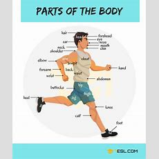 Parts Of The Body In English  Eslbuzz Learning English