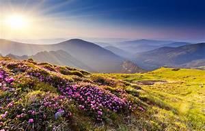 wallpaper sunset rhododendron flowers summer mountains With katzennetz balkon mit fantasy fields magic garden