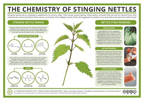 The Chemistry Of Stinging Nettles Compound Interest