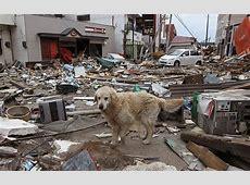 Japan earthquake 'increases likelihood of Tokyo disaster