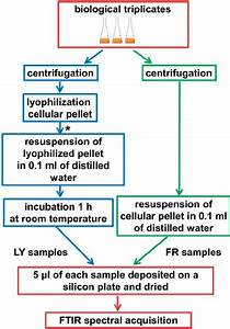 Flow Diagram Of The Experimental Procedure Used The