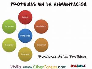 Funciones Proteínas en la Alimentación CiberTareas