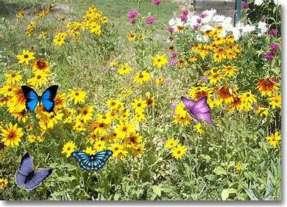 Garden Flower Birthday Happy Animated Gardening Giphy