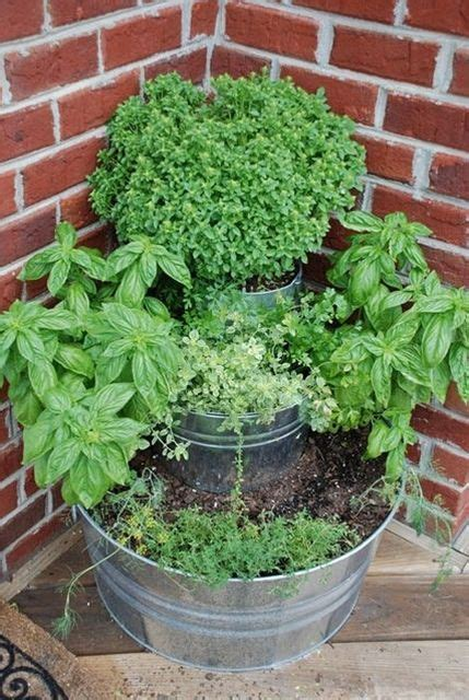 Container Herb Garden  Home + Outdoors Pinterest