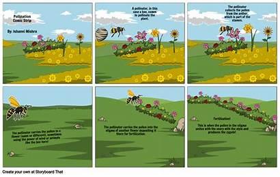 Pollination Comic Strip Storyboard Slide