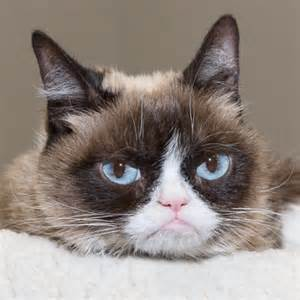what of cat is grumpy cat grumpy cat is joining the cast of cats vulture