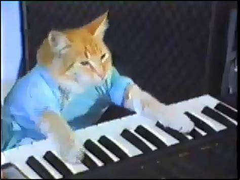 Cat Playing Piano Meme - keyboard cat teh meme wiki