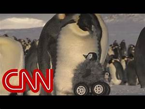 Robot penguin meets real penguin in cutest experiment ever ...