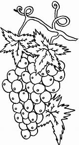Coloring Grapes Wine Pages Colorluna Luna Printable Getdrawings Draw sketch template