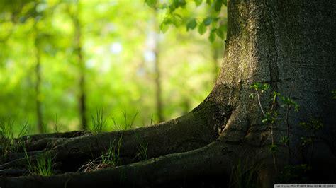 Tree Wallpapers Hd