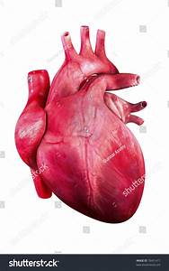 Human Heart Render Heart Human Isolated Stock Illustration ...