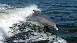 Vitesse Des Animaux : top 10 des animaux marins les plus rapides au monde ~ Medecine-chirurgie-esthetiques.com Avis de Voitures