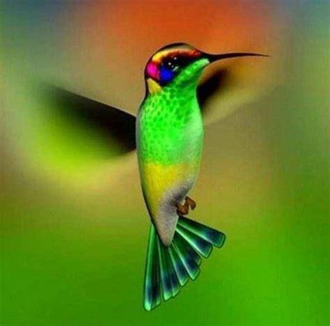 beautiful wings and cute stuff on pinterest
