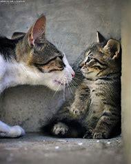 Super Cute Cats Kittens