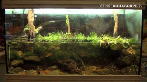 biotope aquarium design contest    place north america youtube