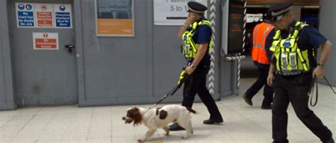 Uk Festivals Sniffer  Ee  Dogs Ee   Their Regulations Your
