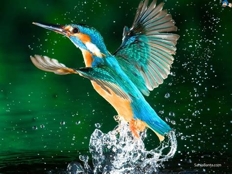 3d Birds Wallpapers by Hd Wide Nature Wallpapers Images I Beautiful Nature