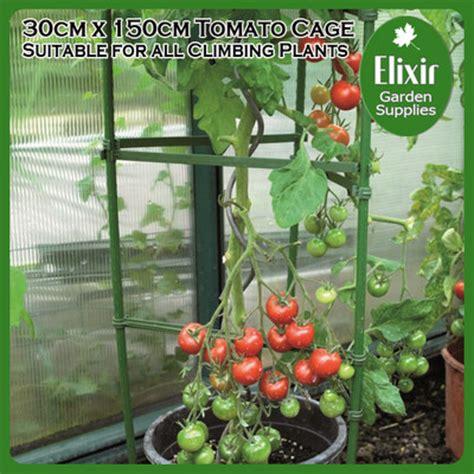 Strong Apollo Garden Tomato & Climbing Plant Flower Fruit