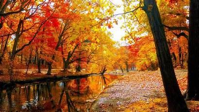 Fall Leaves Autumn Landscape Nature Tree Leaf
