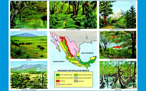 las regiones naturales de mexico para colorear regiones naturales las regiones per 250