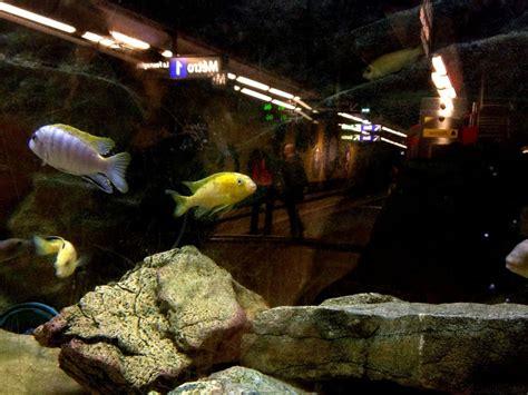 aquarium de metro aquariums du m 233 tro vieux port marseille des poissons exotiques agr 233 mentent la station de m 233 tro