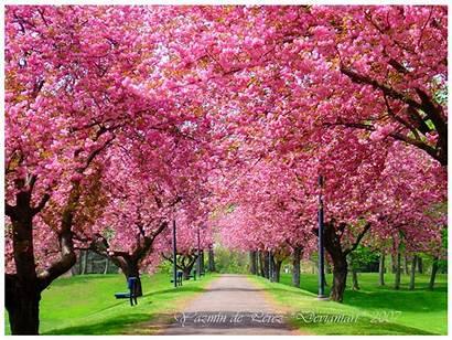 Spring Wallpapers Season Desktop Wallpapertag Popular