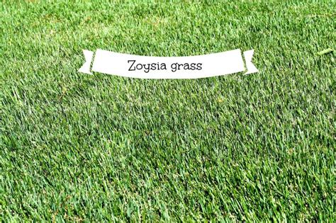 Zoysia Grass In The Carolina's, Is It Right For You