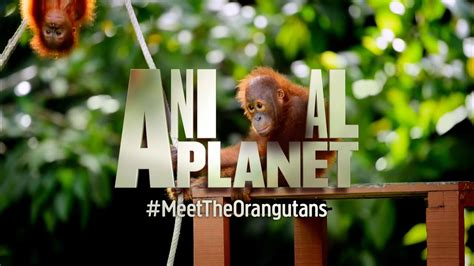 official animal planet uk channel youtube