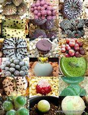 rare cactus seeds ebay