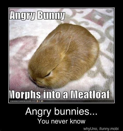 Angry Bunny Meme - 63 best bunny memes images on pinterest pets adorable