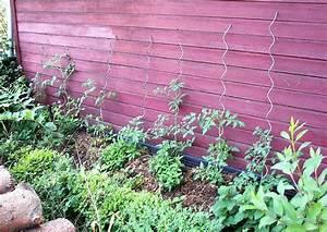 Was Kann Man In Ein Gewächshaus Pflanzen : tomaten anbauen anbau anleitung gie en geizen ~ Lizthompson.info Haus und Dekorationen