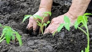 Planter Graine Tomate : c 39 est le moment de semer vos graines de tomates ~ Dallasstarsshop.com Idées de Décoration