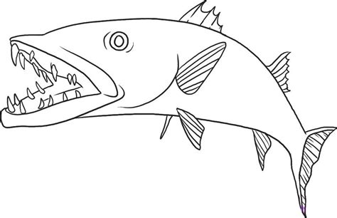 barracuda coloring pages   print