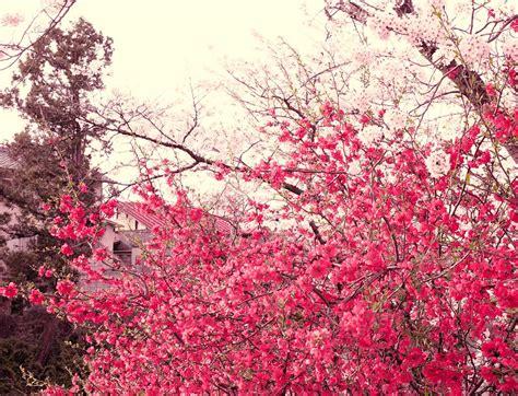 japan flowers nick meek make good time 187 japan