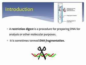 Digestion In Gene Cloning