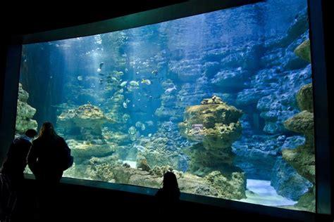 l aquarium de parigi e ile de francia