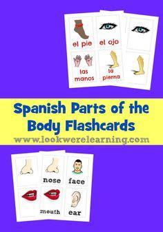 parts   bodyel cuerpo images spanish