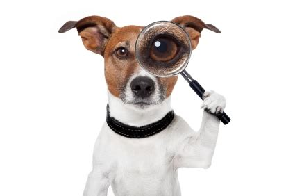 Was Hilft Gegen Flöhe by Wirksame Mittel Gegen Hundefl 246 He Pet Fit