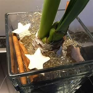 Amaryllis Im Glas : amaryllis die glanzvollen rittersterne auf weihnachten gestimmt ~ Eleganceandgraceweddings.com Haus und Dekorationen