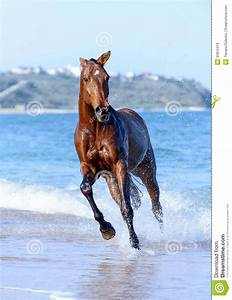 Brown Horse Running In Water | Provincial Archives of ...