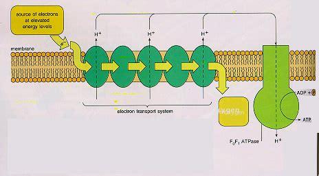 equation showing  relationship  oxygen glucose